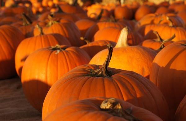 Celebrities at the pumpkin patch: Halloween