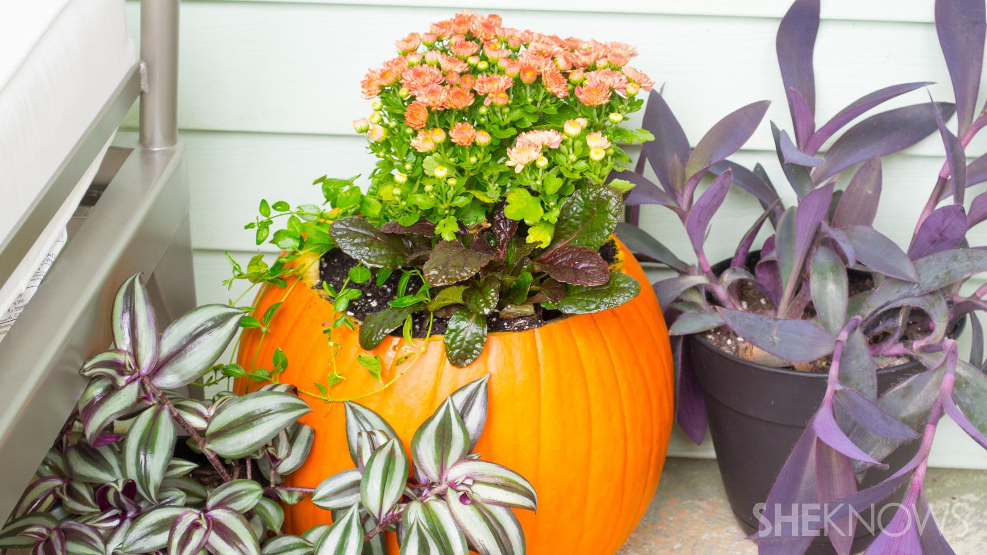 DIY Pumpkin planter: Finished