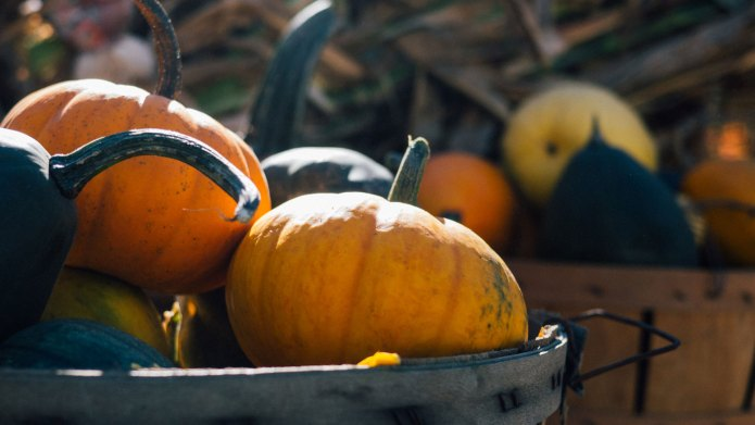 Fall activities that will get the