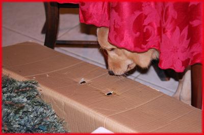 Dog sneaking towards Christmas tree