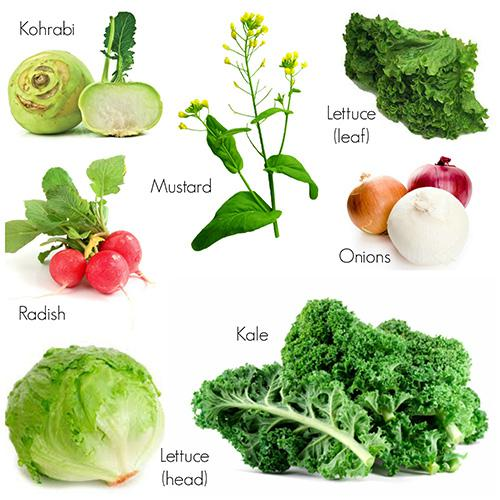 7 Vegetables to plant for your