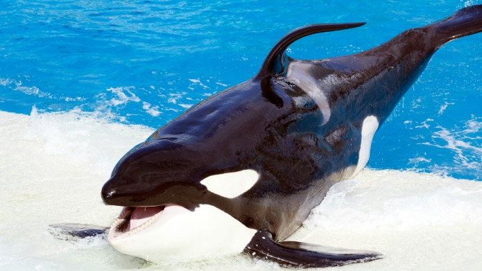 SeaWorld has finally decided to stop