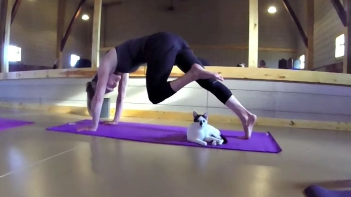 Cat yoga is the new fitness