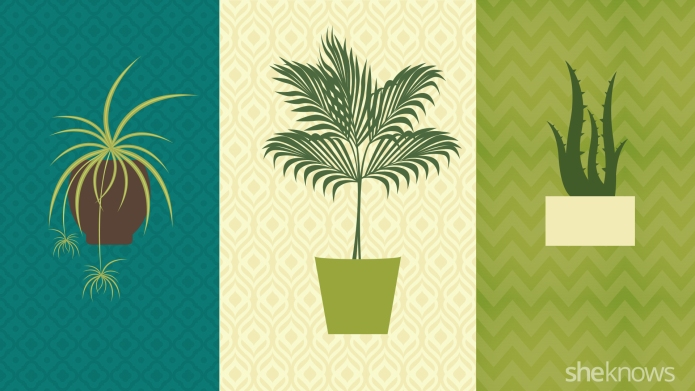 INFOGRAPHIC: Best spots for your houseplants