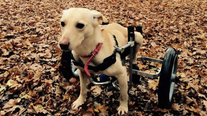 Disabled dog's life changes after she