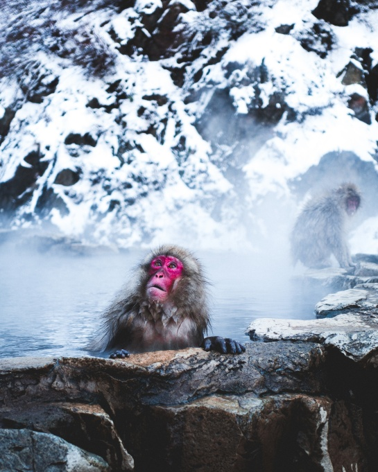 Picture-Perfect Winter Destinations: Nagano, Japan