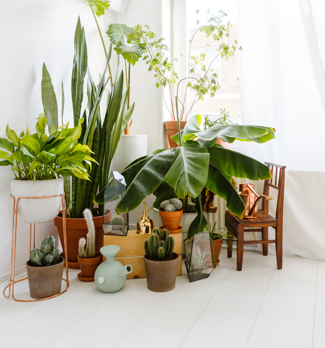 10 Ways to display indoor plants