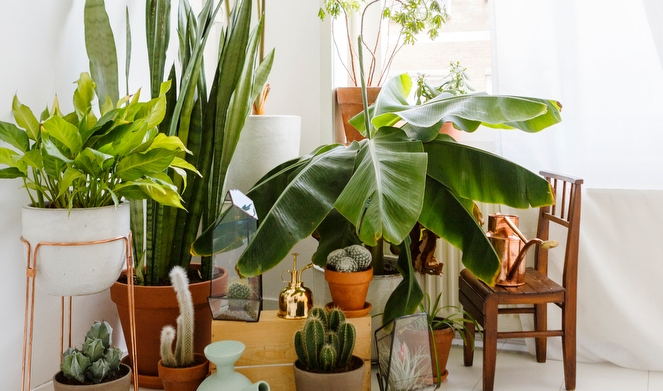 10 Ways to display indoor plants