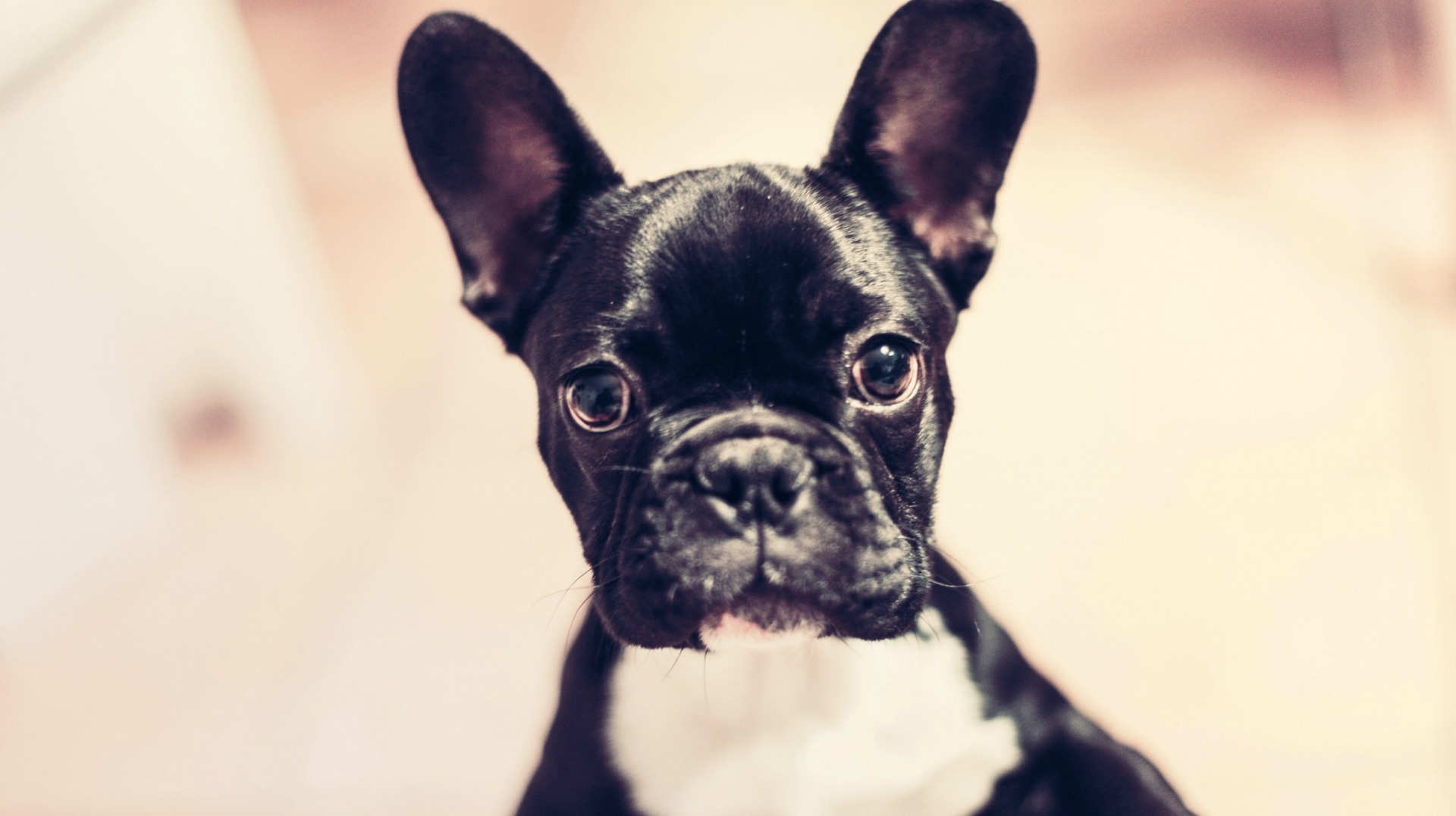200 Little Dog Names That Ll Give Your Mini Pup Some Serious Swagger Sheknows