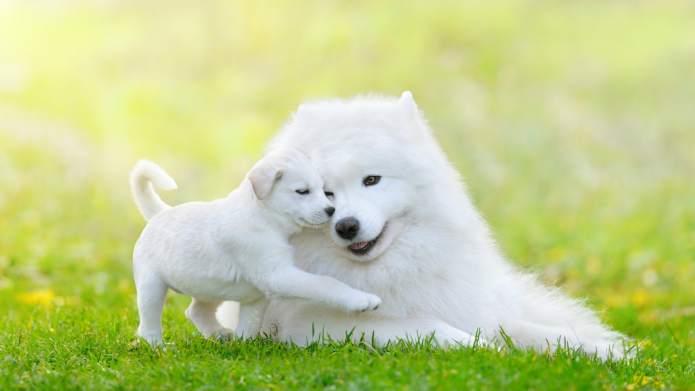 Got Allergies? These Hypoallergenic Dog Breeds