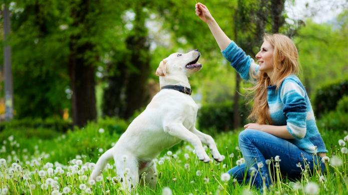Fun sports to teach your dog