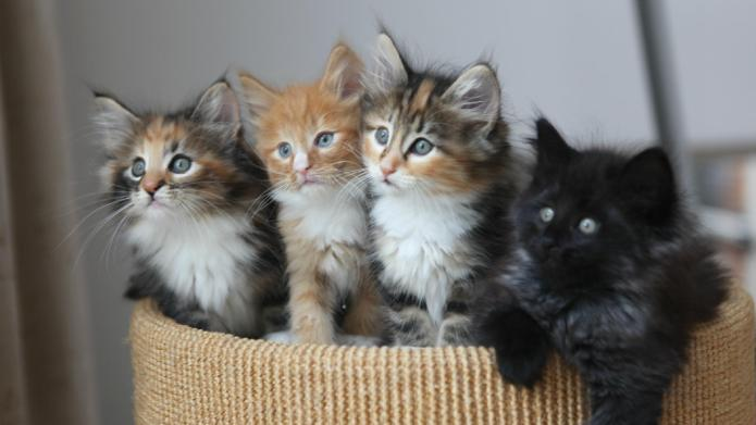 #UberKittens: 10 Adorable cats to get