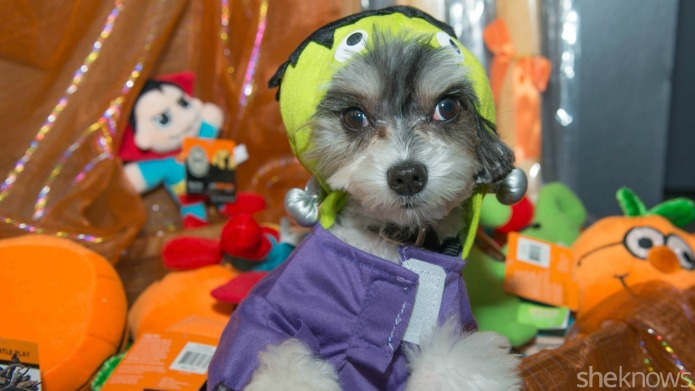 6 Halloween dog toys that your