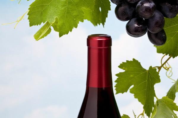 Malbec, the grape of Argentina