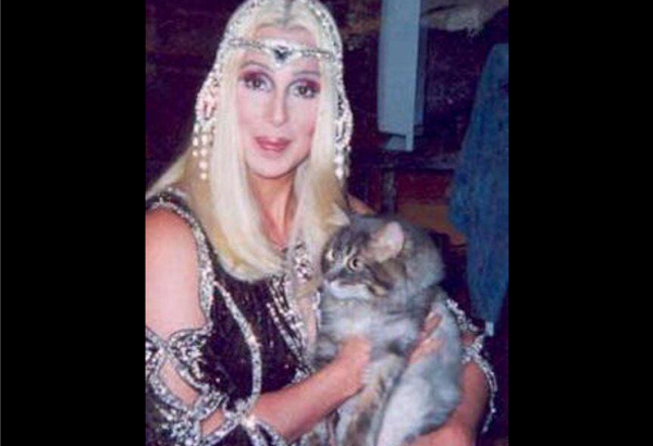 Celebs who love cats: Cher