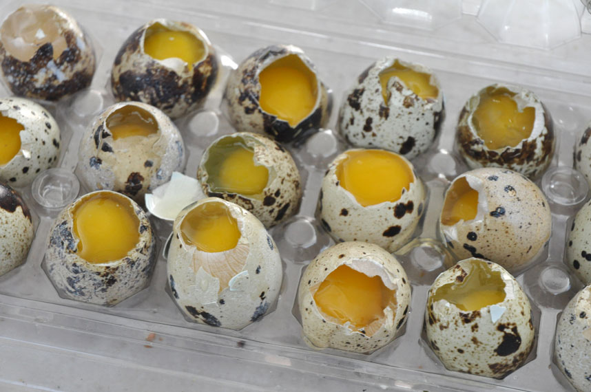 how to cook quail eggs