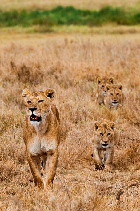 Must-See Travel Destinations: Serengeti National Park
