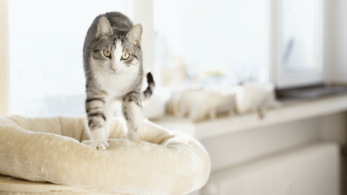 Why Do Cats Knead? There's Actually