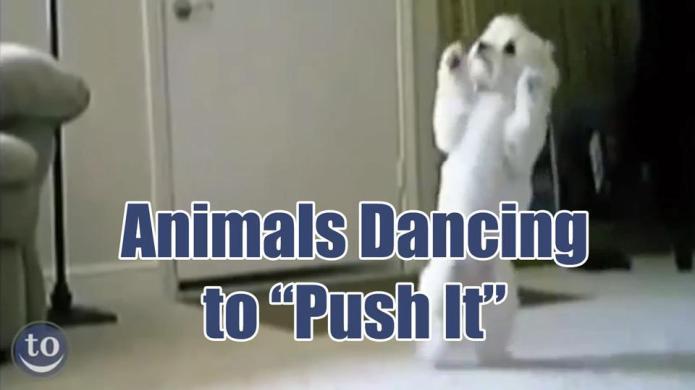 These animals love dancing to Salt-n-Pepa's