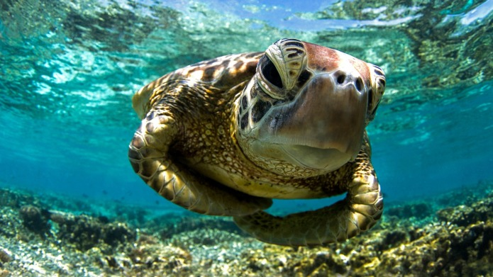 It's World Turtle Day! Celebrate with