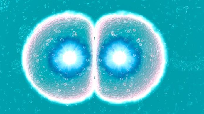 In vitro fertilization. Image 3 of