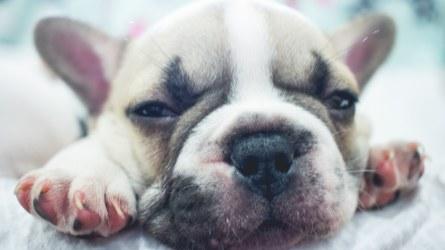 68 French Dog Names That'll Make