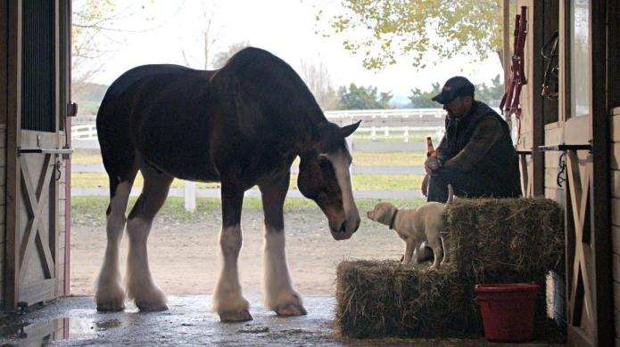 This Budweiser Super Bowl #BestBuds commercial
