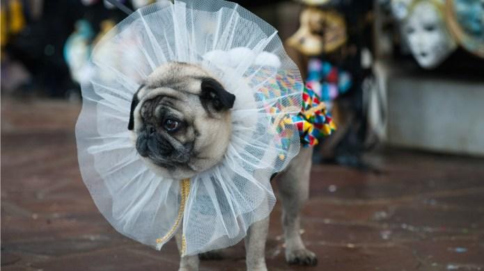 28 pet costumes we wish we