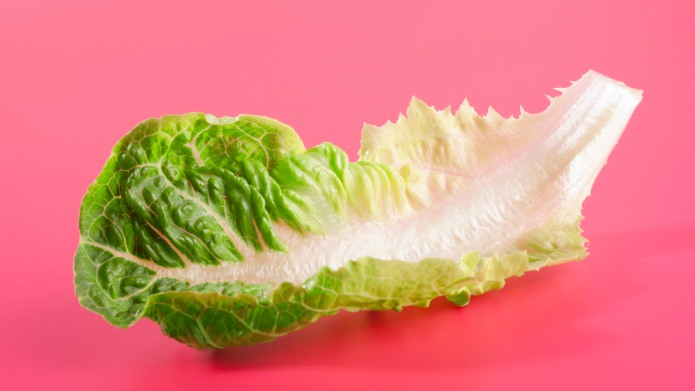 Salad Lovers, Rejoice! Romaine Lettuce Is
