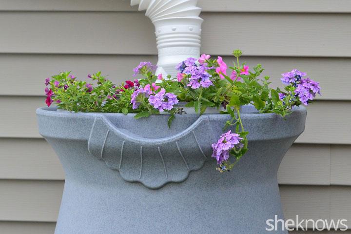 Flowers in rain barrel