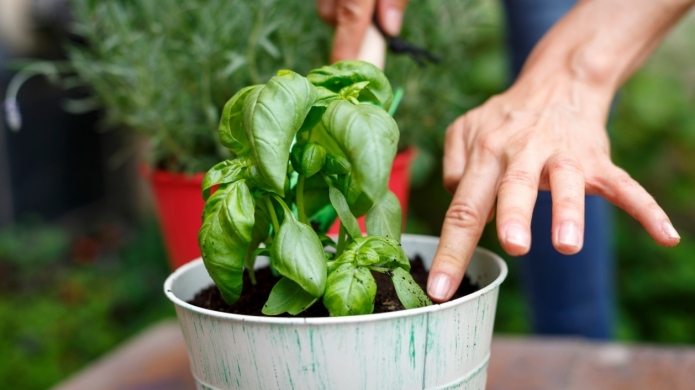 5 Natural alternatives to pesticides that