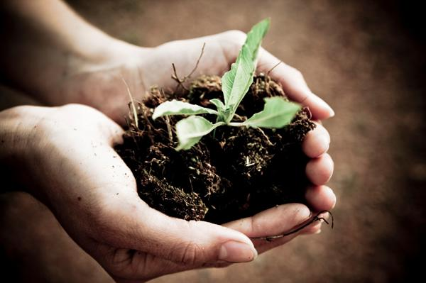 Compost gardening guide