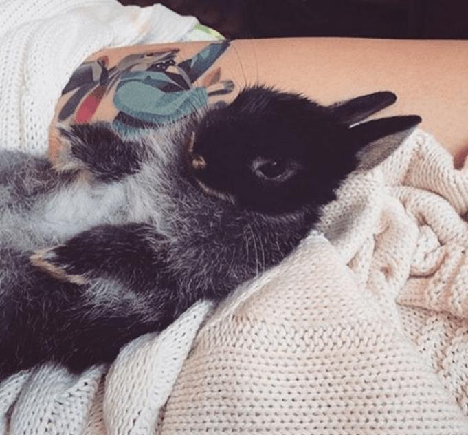 Adorable bunnies