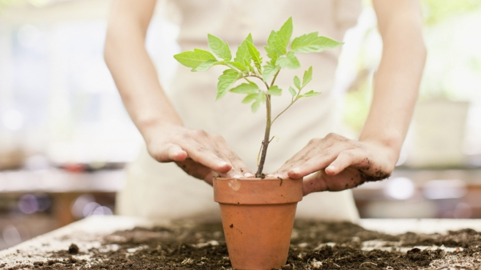 How to repot your plants in
