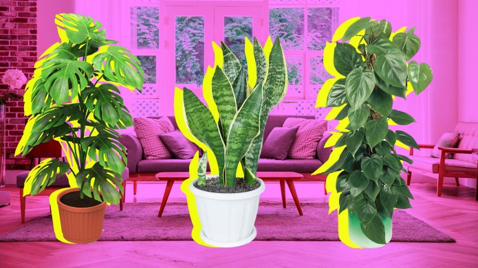 The Low-Light-Loving Houseplants That Can Survive