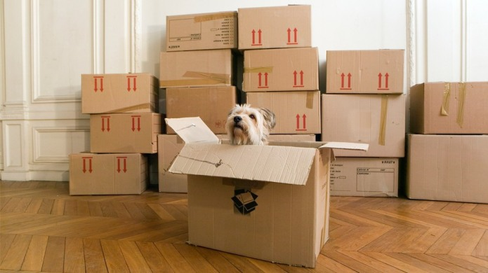 7 Tips for Finding Pet-Friendly Rentals
