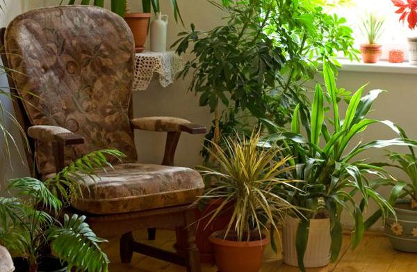 Plants that make your home healthy