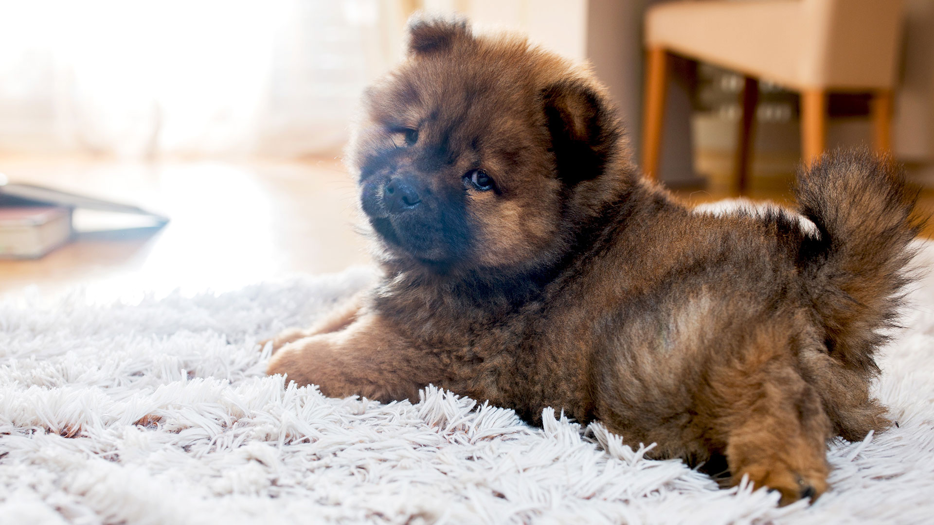 The 13 Worst Dog Breeds for Kids With