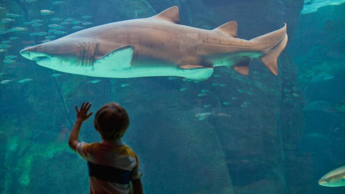 12 Cute kid products for Shark