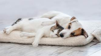 dog wetting bed stop these 13 cat breeds actually behave like dogs what to do if your housetrained dog starts peeing indoors sheknows
