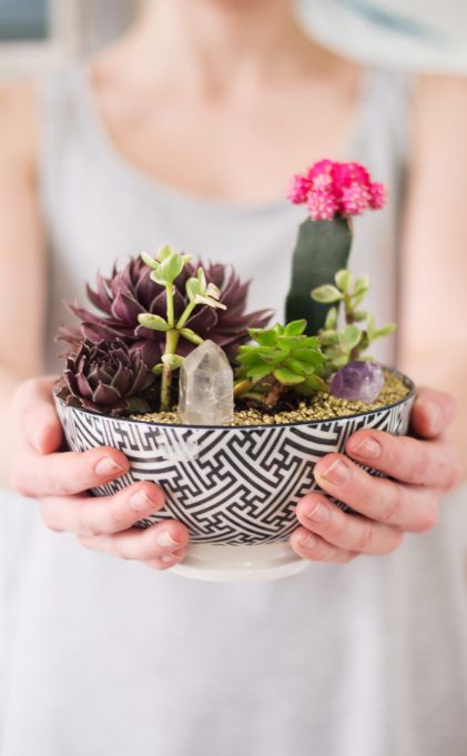 Winter Decor DIYs: Succulent garden