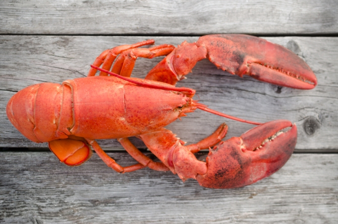 Common Foods That Can Turn Toxic During Cooking: Lobster | Healthy Eating 2017