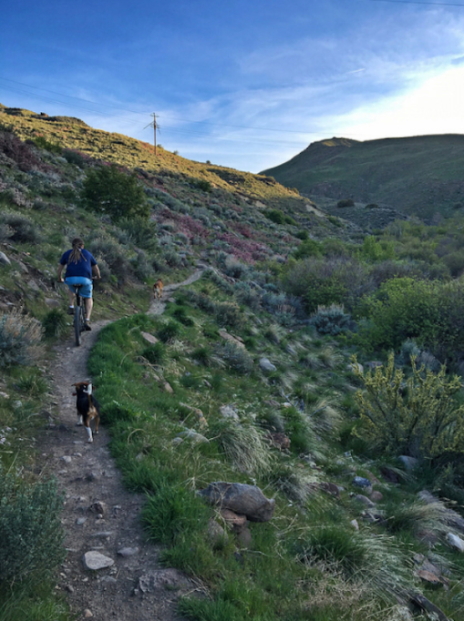 Best Kid-Friendly Hikes in the U.S. — Hiking with kids outside Reno, Nevada