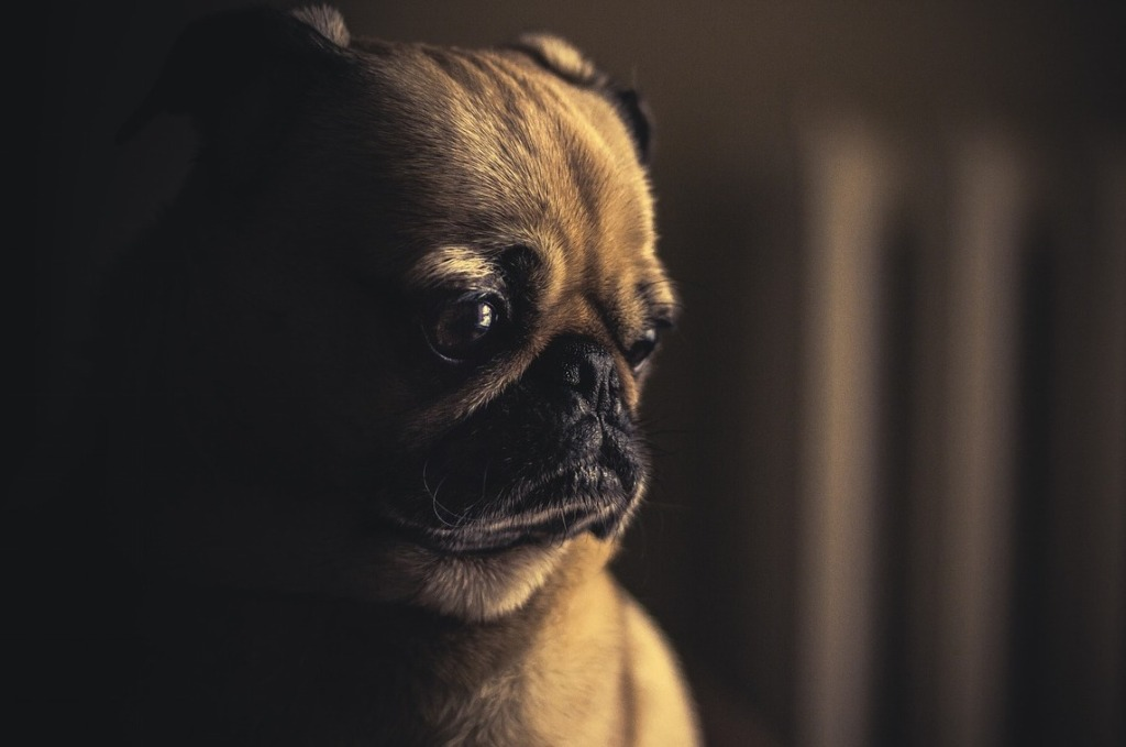 Here's How Much It Really Costs to Put a Dog Down – SheKnows
