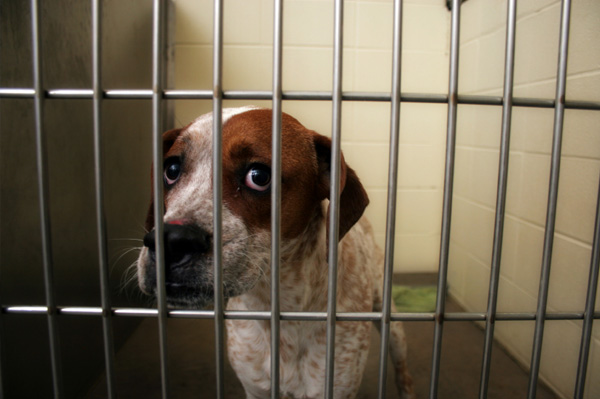 Advantages of adopting shelter dogs – SheKnows