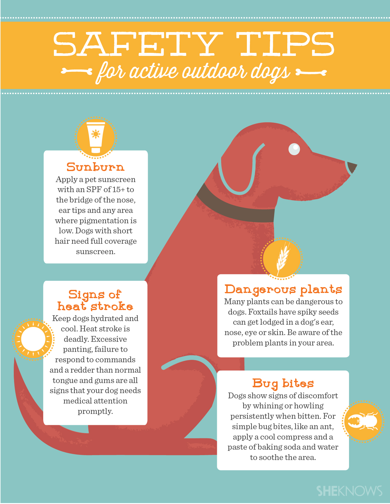 Safety tips for active outdoor dogs