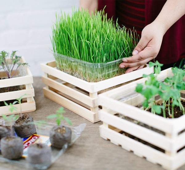 Garden Organic salad container - repurpose