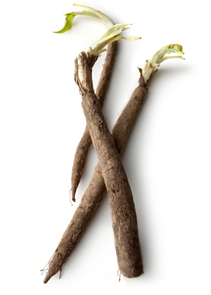salsify root