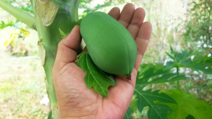 The benefits of paw paw ointment