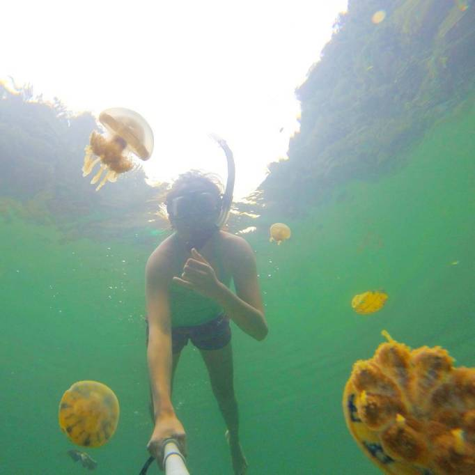 Beautiful Adventure Destinations: Swim With Jellyfish In The Socorro Islands